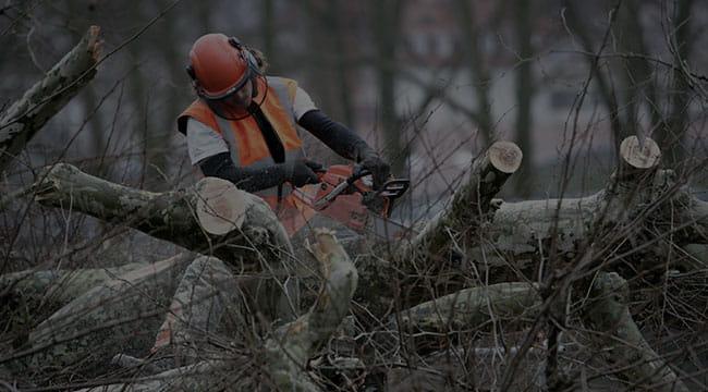 Douglasville Tree Service