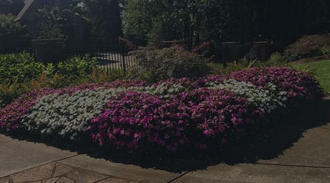 Douglasville Garden Design